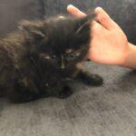 Ajax The Kitten