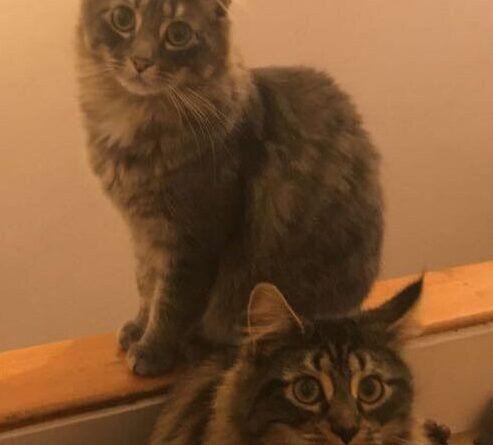 Fury And Luther Are Pets Of The Week